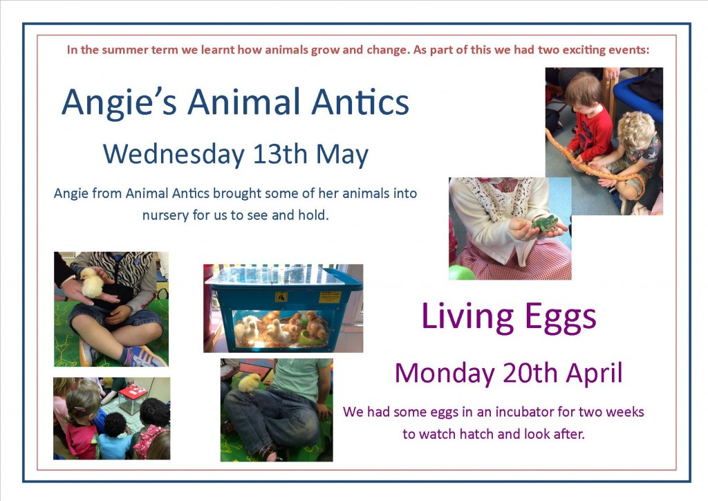 Animal Antics & Living Eggs